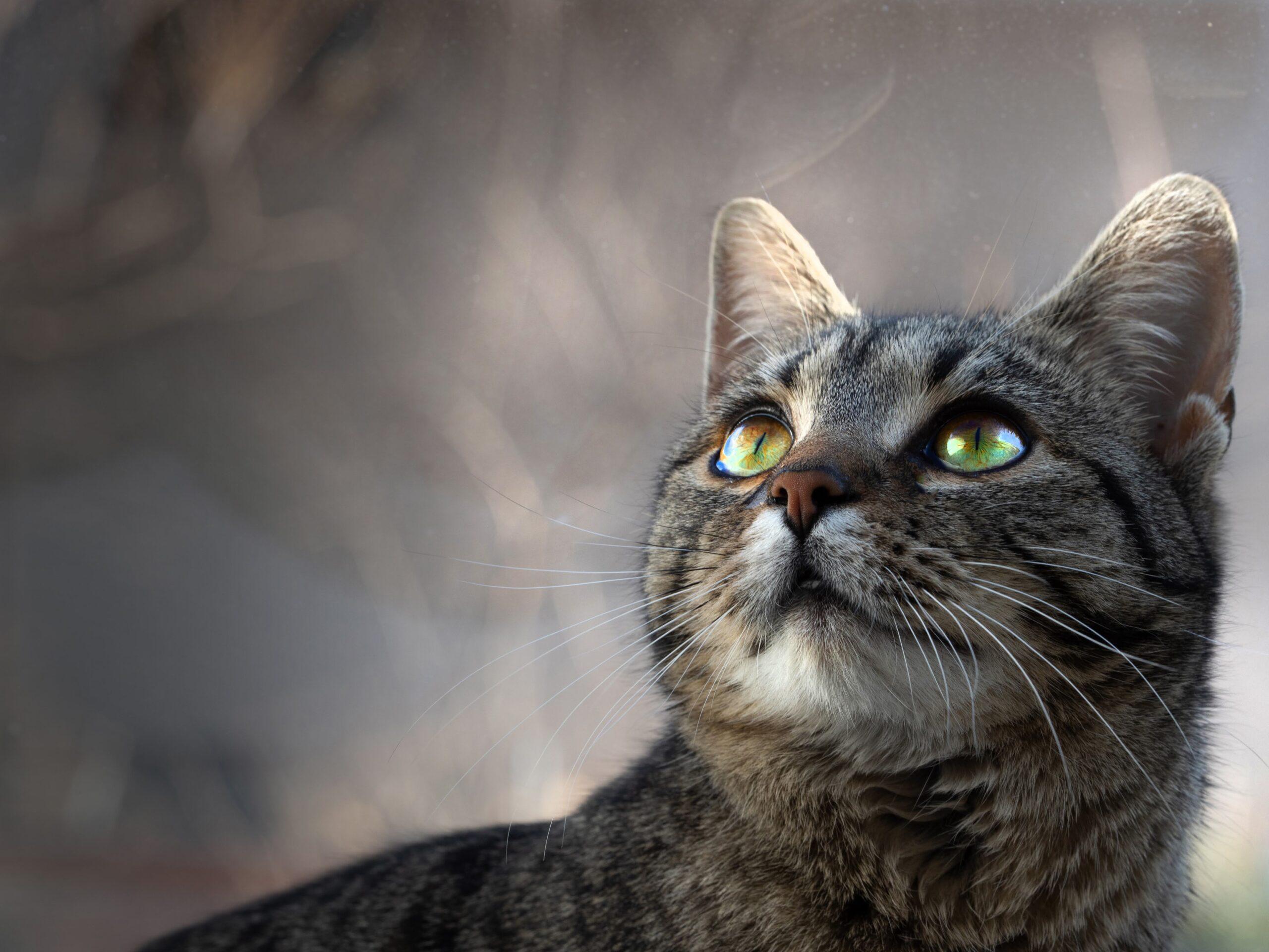 Cica, kisállat, fotózás