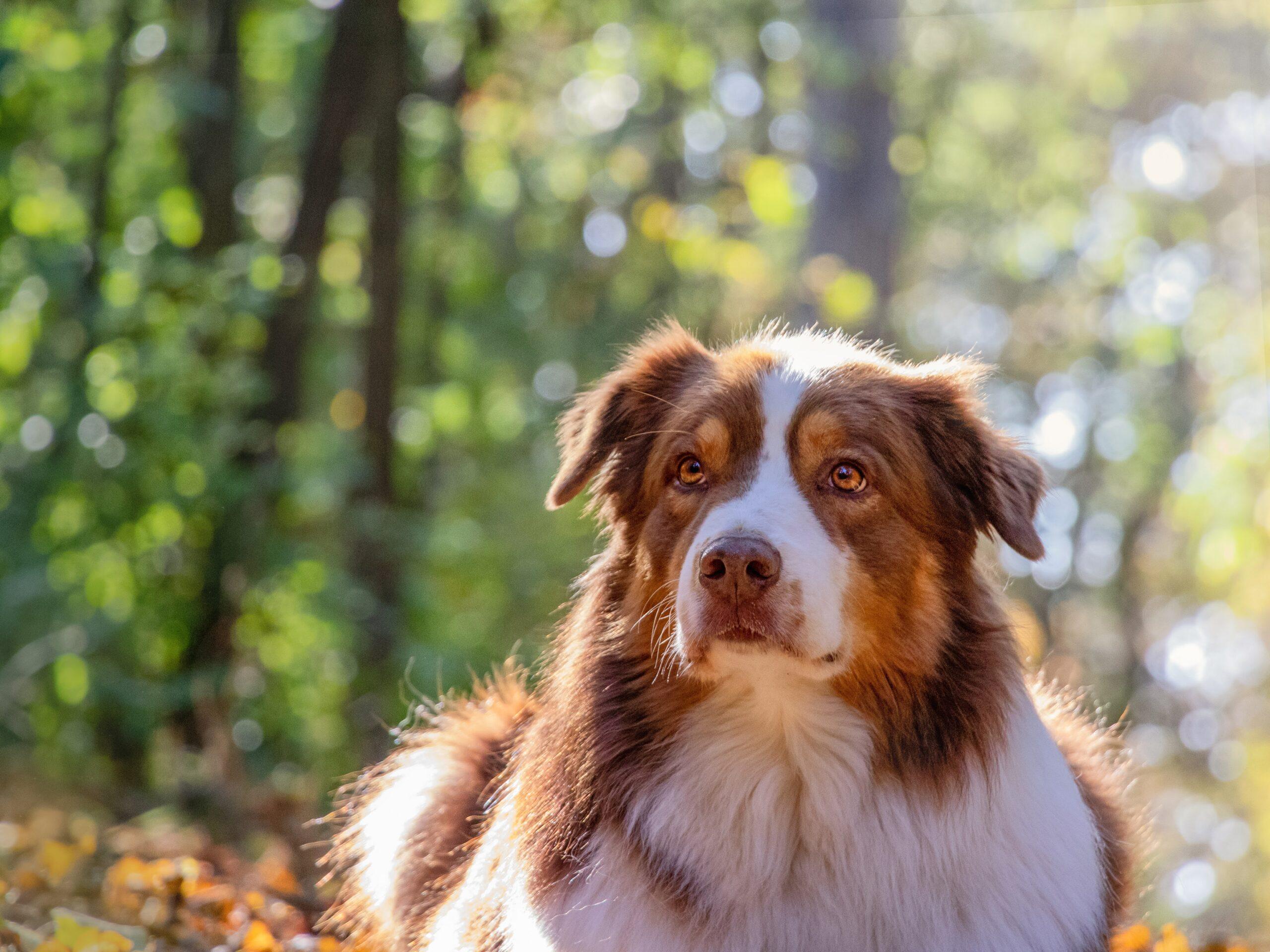 kutya, kisállat, fotózás